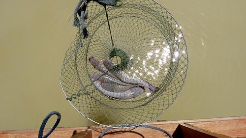Koh Samui Skylake fishing park コサムイ 淡水魚 釣り0015