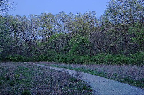 Forest 44 Conservation Area, near Valley Park, Missouri, USA - horse trail at dusk 2
