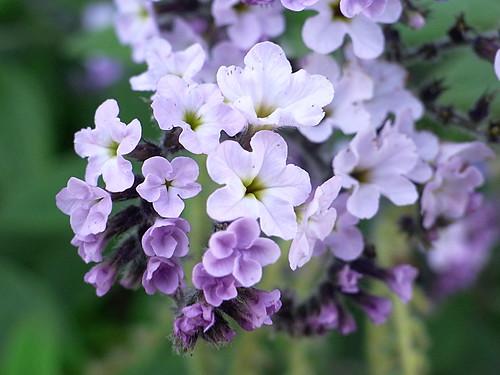Macro Flower 12/13