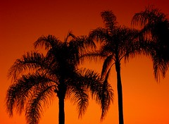 Palms at sunset (Mr. Physics) Tags: sunset vacation orange palms pair palmtree jamaica tropical straight tropics 3ofakind msoller 2pair