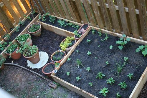 Kitchen garden in my sunny corner