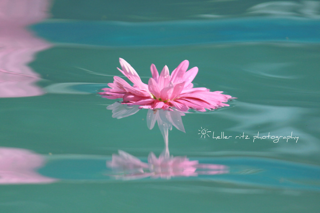 Mothers Day Flower_Pink