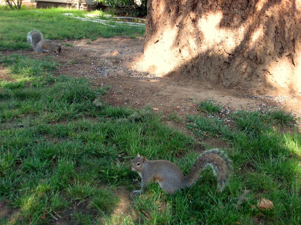2010-05-19 squirrels 001