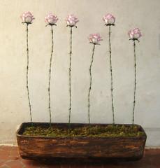 Roseira em arame farpado (Feito Flr) Tags: em arame farpado roseira