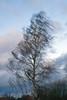 Birke im Sturm (PauPePro) Tags: himmel wolken birke sturm niederotterbach sognidreams