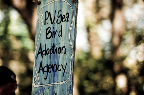 pv sea bird adoption agency