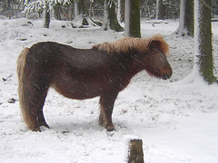 russ i ekebyhovsparken (Per Ola Wiberg ~ Powi) Tags: friends horse snow nature sweden explore pony harmony sverige february russ 2009 februari musictomyeyes hst friendsforever galope naturesfinest awesomeshot beautifulearth blueribbonwinner hiddentreasure eker ekebyhovsparken contactgroup ekebyhov natureplus flickrhearts mycameraneverlies photosandcalendar flickrbronzeaward worldofanimals heartawards diamondstars photostosmileabout exemplaryshotsflickrsbest naturewatcher wonderfulworldmix natureislife goldstaraward photoexplore flickrestrellas funfanphotos highqualityimage ilovemypics explorewinnersoftheworld beautifulshot fotosconestilo 469photographers overtheshot damniwishidtakenthat photographersgonewild grouptripod oletusfotos doubledragonawards photographerparadise naturescreations tif awwwed~cuteadorablephotos planetearthanimalsbirds dagmarsanimalfarm welcometoallanimals