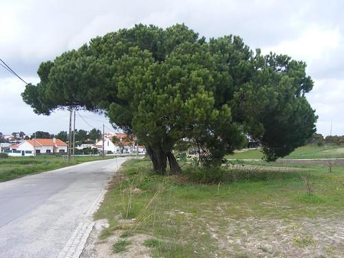 Alfarim - Sesimbra