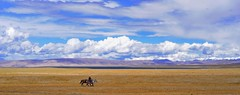 Nam tso plains Tibet,   (reurinkjan) Tags: horse nature tibet tibetan namtso grassland 2008 horserider changtang namtsochukmo nyenchentanglha tibetanlandscape tengrinor janreurink damshungcounty damgzung