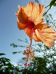 Bukit Cahaya Skytrek Adventure #1  A Fresh New Day For Adventure. (ighosts) Tags: travel flowers friends 21 safety adventure hibiscus malaysia skytrek shahalam bukitcahaya skytrex malaysiaagriculturalpark tamanpertanianmalaysia anuniverseofflowers hibiscuswonder skytrekking
