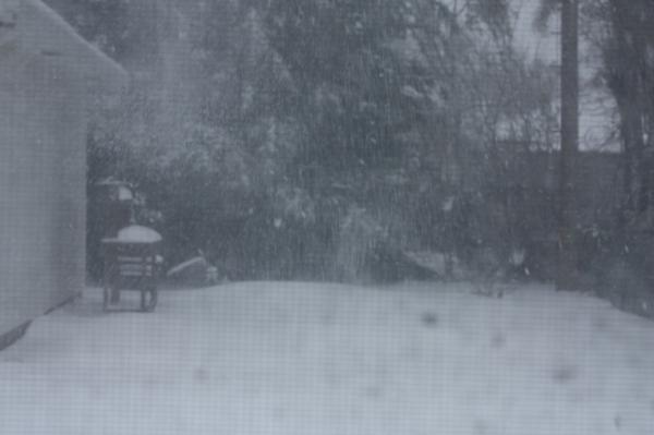 2009 Spring Snow 2