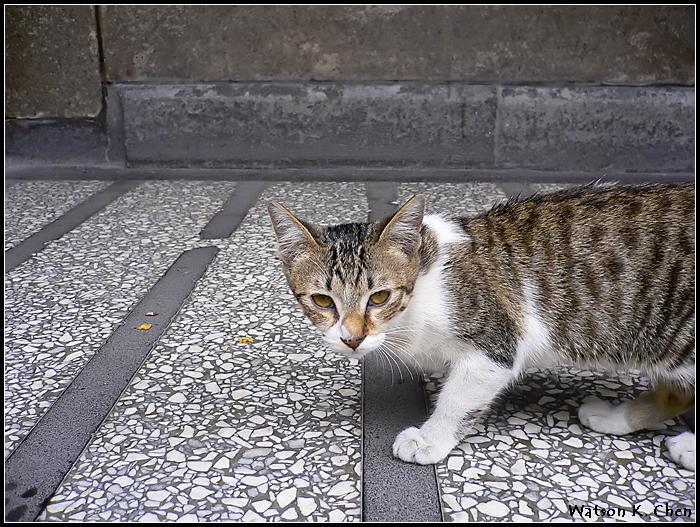 20090414-龍山寺貓貓-05.jpg