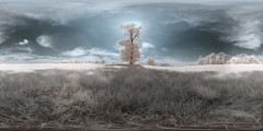 Baum IR I tree IR (maxelmann) Tags: panorama tree germany ir stitch 21 360 leipzig fisheye infrared baum 360x180 nn 360 deich infrarot cospudenersee ptgui equirectangular channelshifting kanaltausch kugelpano woodeffekt pelengpeleng club16 nodalninja5 blauweis maxelmann eos350dir