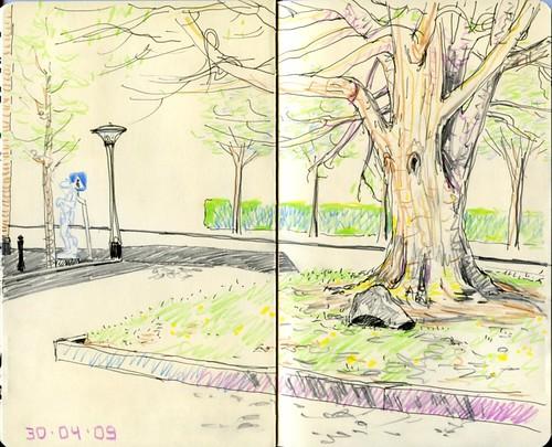 Træet på Klostertorvet