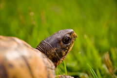 Slow Down....Take It Easy....Slow & Steady! (Captivating, Inc.) Tags: turtle explore leisa slowdown takeiteasy slowsteadypace