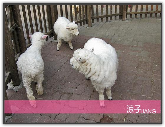 愛寶樂園(動物篇)17