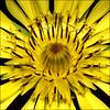 ~ Nature's Circles ~ (ViaMoi) Tags: flower macro tamron90mm f27 digitalcameraclub canon40d viamoi 100commentgroup 430exlightchute