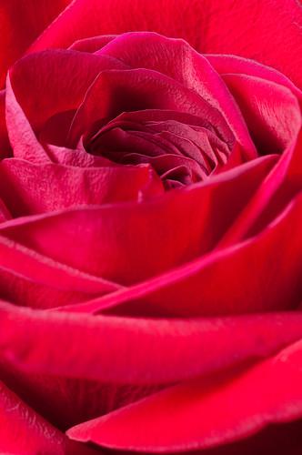 A Dozen Roses for Mom - 4