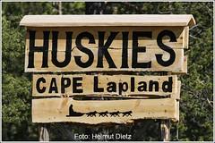 Huskies-Cape-Lapland, Enontekiö - Finnland