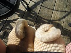 pug tails