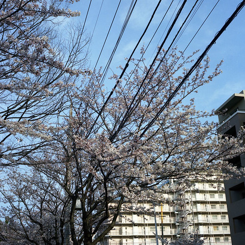 The Blossoms and the Wires