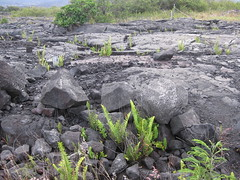 The lava field walk - very difficult to walk on in the dark with only a flashlight!