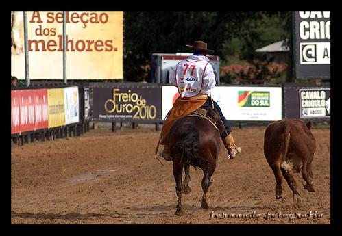 Bocal de Ouro 2010