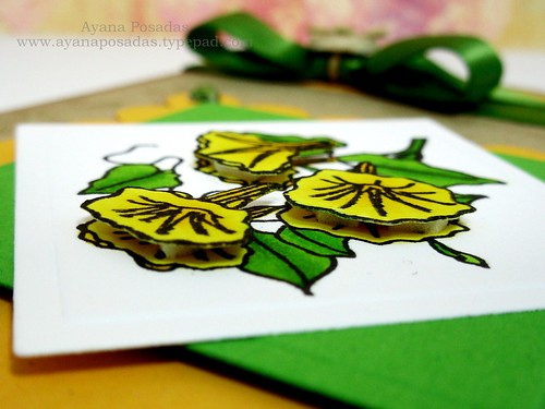 RI Daffodils (3)
