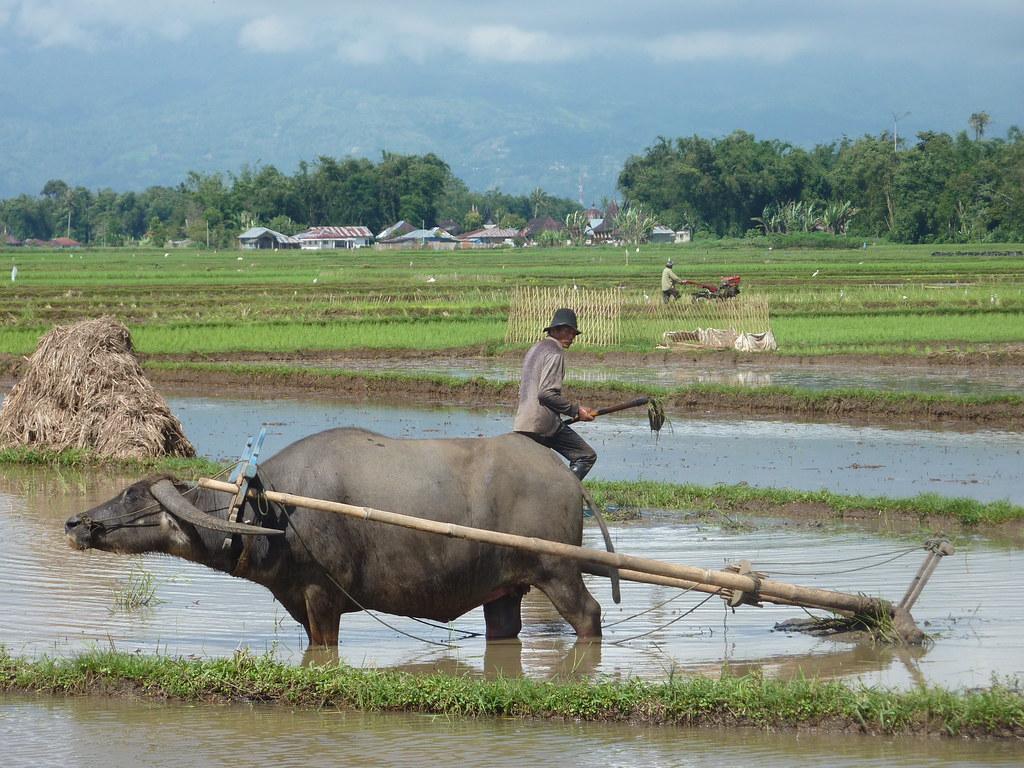 Sumatra-Bukittinggi (147)