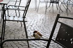 Lonely Bird (andreagiugio) Tags: light italy bird animal square torino outside nikon italia photographer place andrea may lonely piazza fotografia turin animali luce solitario maggio vittorio giacomo giuliano esterno leopardi passero 2011 1580mm d3100