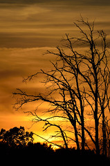 Dead Trees in Sunset DSC_1225 by Mully410 * Images