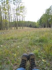 Hiking inthe Aspens...