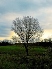 The Joshua Tree (AlessandroDM) Tags: streets roma tree u2 joshua song albero wherethestreetshavenoname caffarella canzone landscapesofvillagesandfields