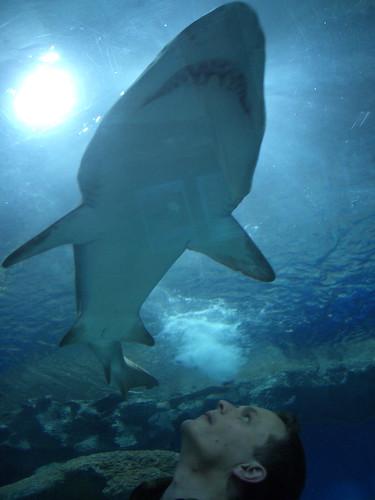 Shark! - flckr - dullhunk