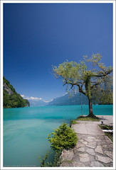 My dream escape (Himadhu) Tags: blue lake tree water landscape ilovenature switzerland europe dream glacier bern canoneos350d interlaken sigma1020mmf4056exdchsmlens lightiq hoya62mmcircularpolarisingfilter