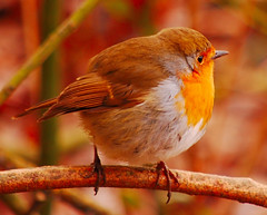 Robin (ashley.gill15) Tags: uk friends england nikon peaceful surrey guildford 1001nights soe blueribbonwinner d40 photographyrocks naturegod mywinners abigfave nikond40 anawesomeshot mycameraneverlies platinumheartaward funfanphotos natureselegantshots nikonflickraward alittlebeauty flickraward savebeautifulearth fromminikku~littlebirdie