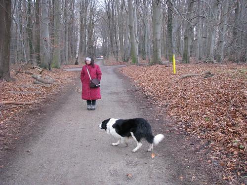 8-O cão pastor se dedica ao seu trabalho