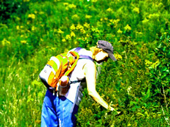 Picking wildflowers (tomswift46 ( Hi Res Images for Sale)) Tags: woman spyshot candid country wildflowers picking