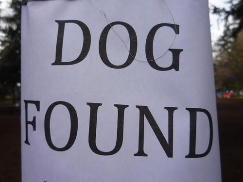 dog found!