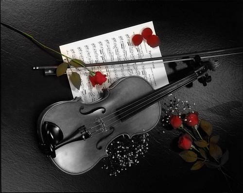 wallpaper rosas. Wallpaper Violino e Rosas. Trabalho Experimental