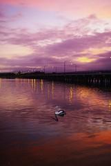 Lake Illlawarra sunset from Windang (Vanessa Pike-Russell) Tags: sunset lake landscape pentax iso400 creative australia nsw mostinteresting 2528 f40 windang illawarra 23mm sigma1850mmf3556dc 145s k20d pc2528 pentaxk20d vosplusbellesphotos vanessapikerussellbest
