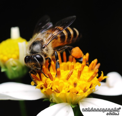 Outdoorgraphy : Bee Series #1