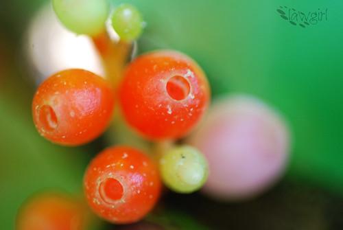 365_Orange[2009]