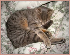 naptime (Gdnght1) Tags: sleeping pet cat kitty meow rescued waterbed catnipaddicts