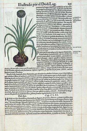 015- Del ajo 1-Pedacio Dioscorides Anazarbeo 1555