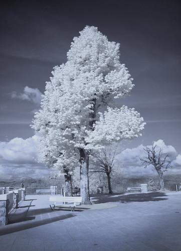 Drevesa na Sveti gori