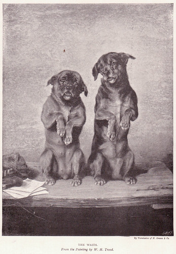 Old picture of two cute dogs