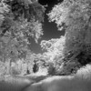 AR0022744 (morgan.adrian) Tags: trees rural landscape ir countryside eveningsun gloucestershire infrared ricohgrd2
