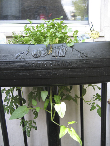 planters with upside down tomato plants