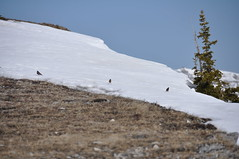20090524_038_N_PraireMountain Photo